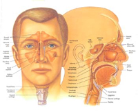 ENT في الهند / طب الأذن والحنجرة